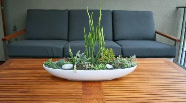 plantes d'intérieur décoratives