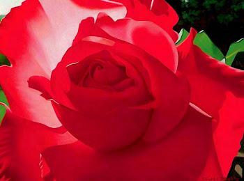 Cuadros de Rosas