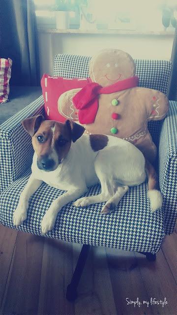 pies na fotelu z ciastkiem i lukrowane guziczki