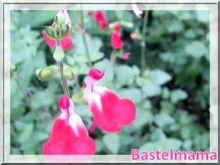 Blüte im August