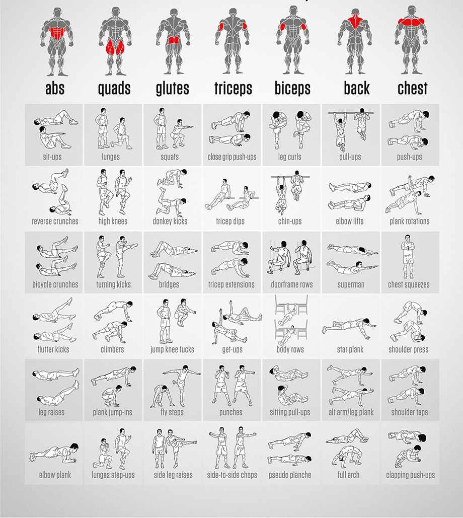 Upper Body Free Weight Exercise Diagrams Wiring Diagram