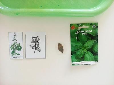montessori gardening