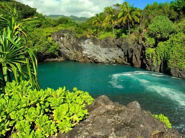 Pavan Mickey Beautiful Gardens Of Maui