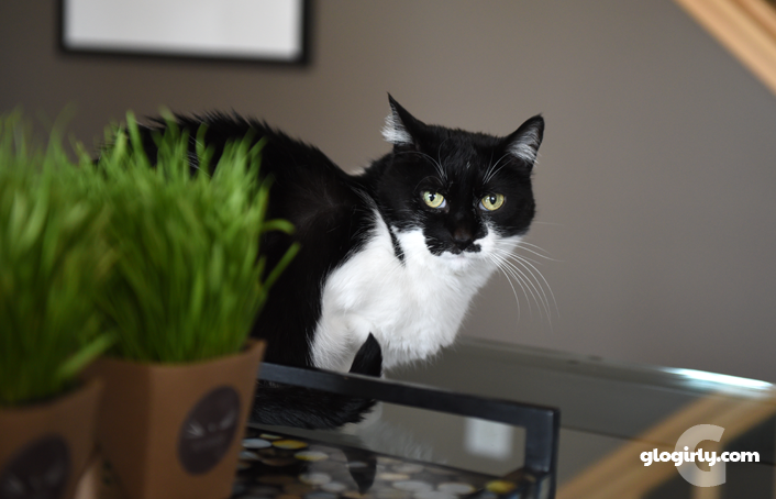 Katie looking into camera from behind her cat grass
