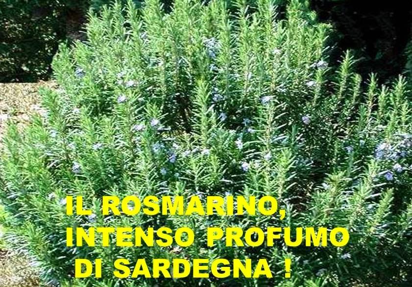 Giardino e arredamento esterni Semi e bulbi Di camere aglio una ...