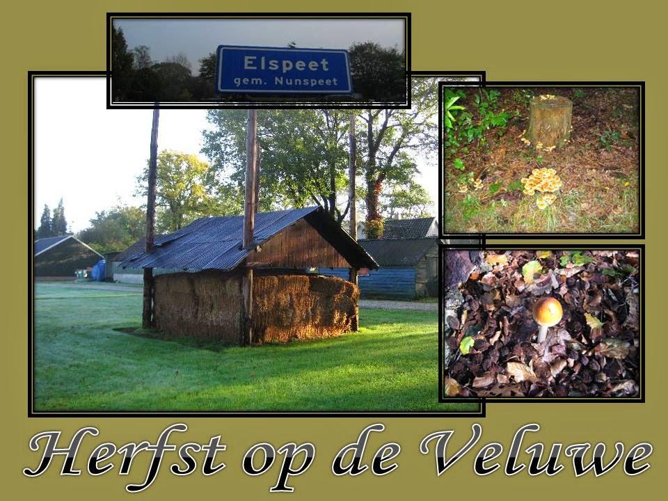 http://www.imagenetz.de/ff922bac0/herfst-2011-de-Veluwe.ppsx.html