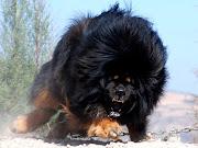 Large Beasts