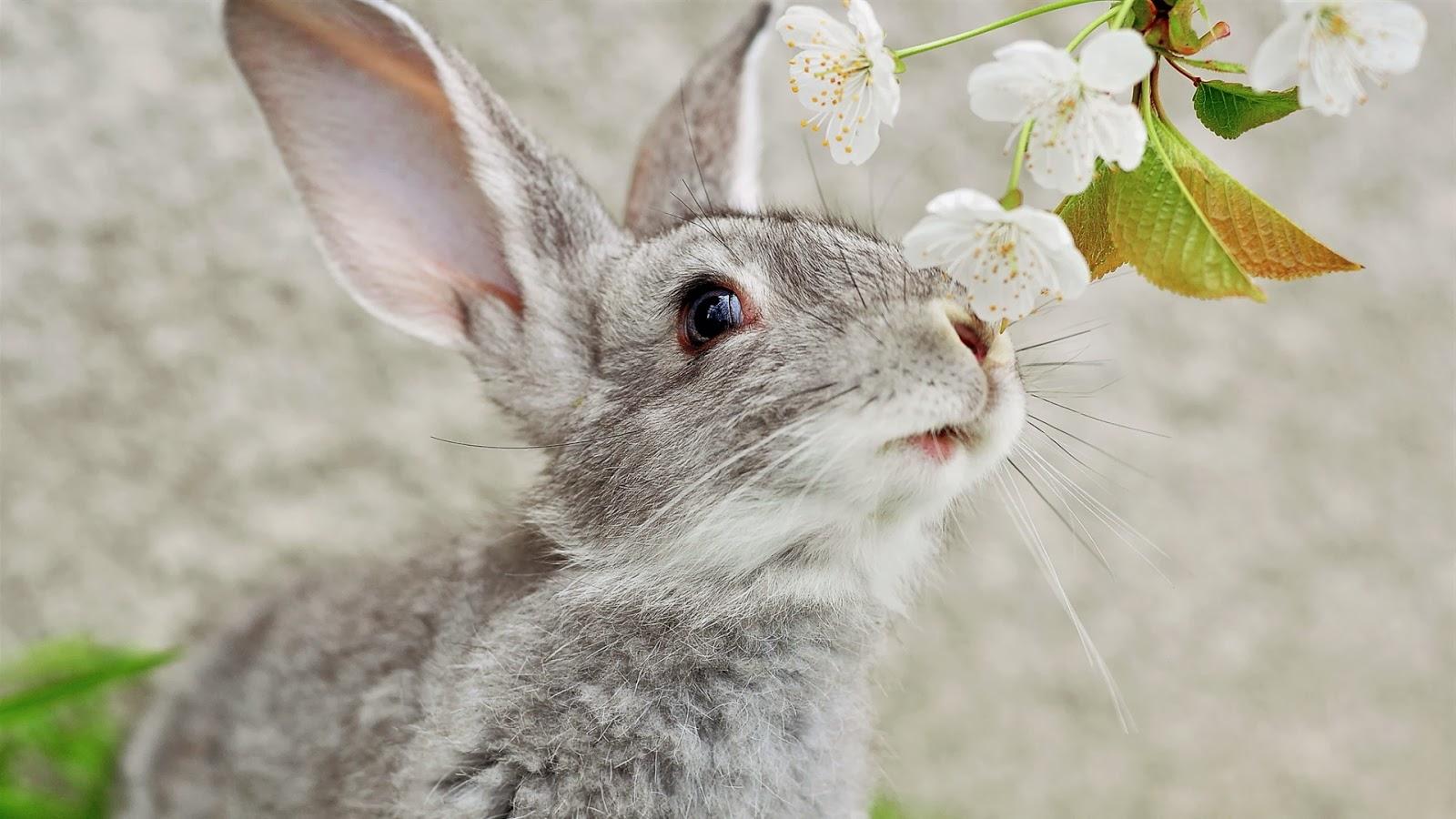 rabbit wallpaper for desktop - photo #22