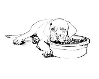 a desenhar Cachorro Lindo colorir