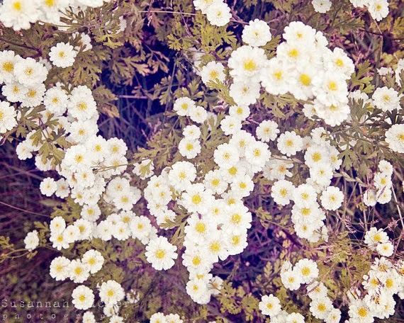 https://www.etsy.com/nz/listing/173851578/daisy-photograph-shabby-chic-decor