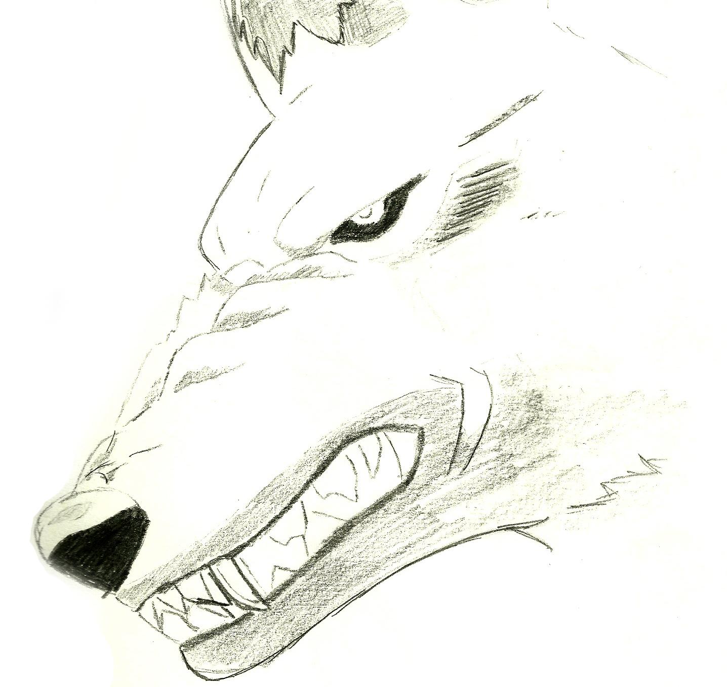 http://2.bp.blogspot.com/-4yn86ZWVUSY/TVglVTUQrAI/AAAAAAAAAAk/rJ7BQK_t9dc/s1600/Wolfs+face.jpg
