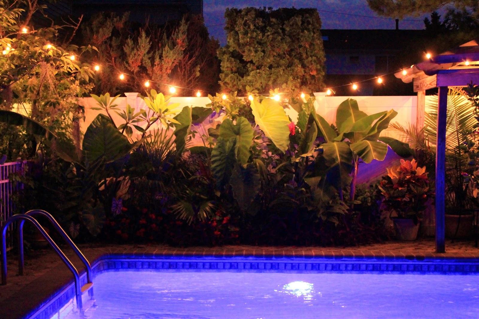 tropical gardening in new york city!: night pics around the pool area