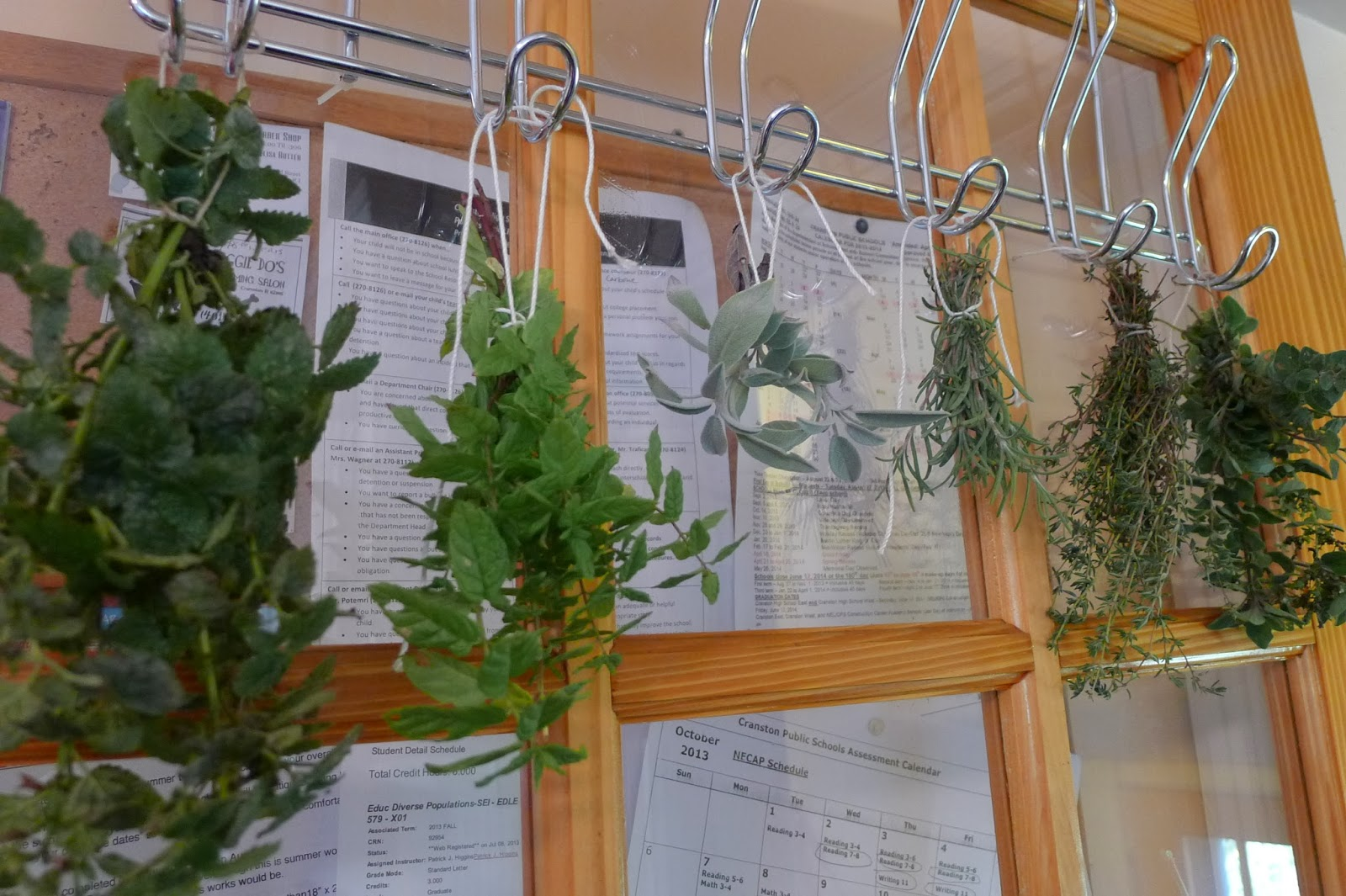 less noise more green what to do with herbs over winter