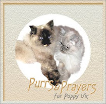 Please purr for Poppy Vic