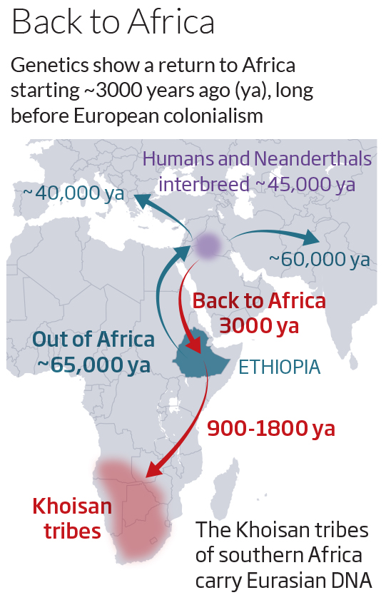admixtures in ethiopia Special topic: sub-saharan african admixture in ashkenazic jews autosomal dna and mitochondrial dna samples of ashkenazic jews occasionally reveal faint signals of descent from sub-saharan africans from west, central, south, and east africa who belong to the negroid race, which is typified by the bantu peoples and differentiated from the pygmy and bushmen races as well as from the north.