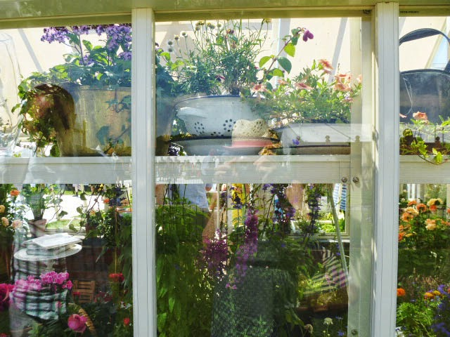 through the greenhouse window