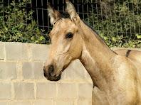 Cavalls sota la carena