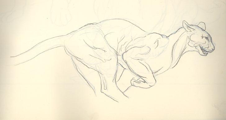 Le blog d 39 lizabeth croquis animaux - Croquis animaux ...
