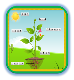 http://www.turtlediary.com/kindergarten-games/science-games/plant-life-cycle.html
