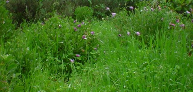 Blog de astaroth a quitar las malas hierbas - Quitar la mala vibra ...