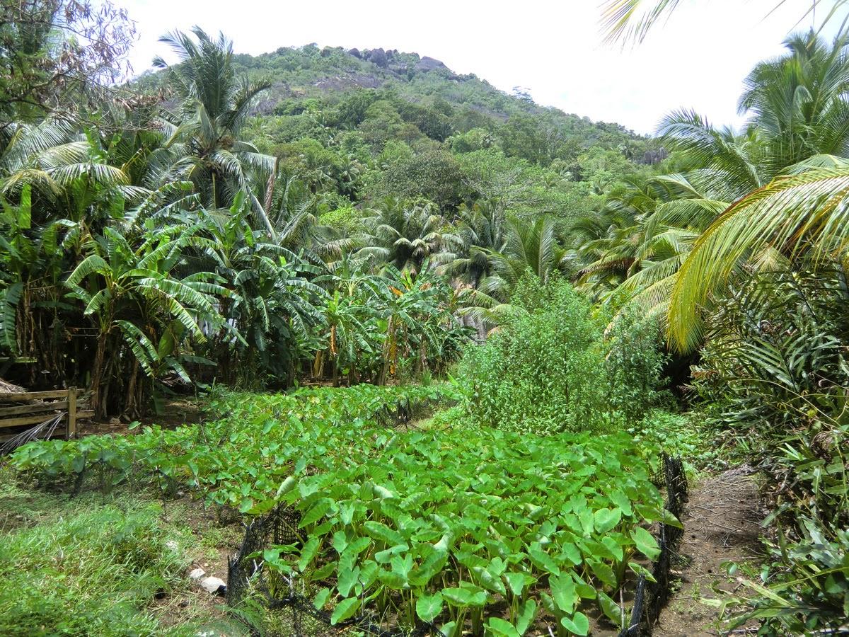 Priroda-Seychell