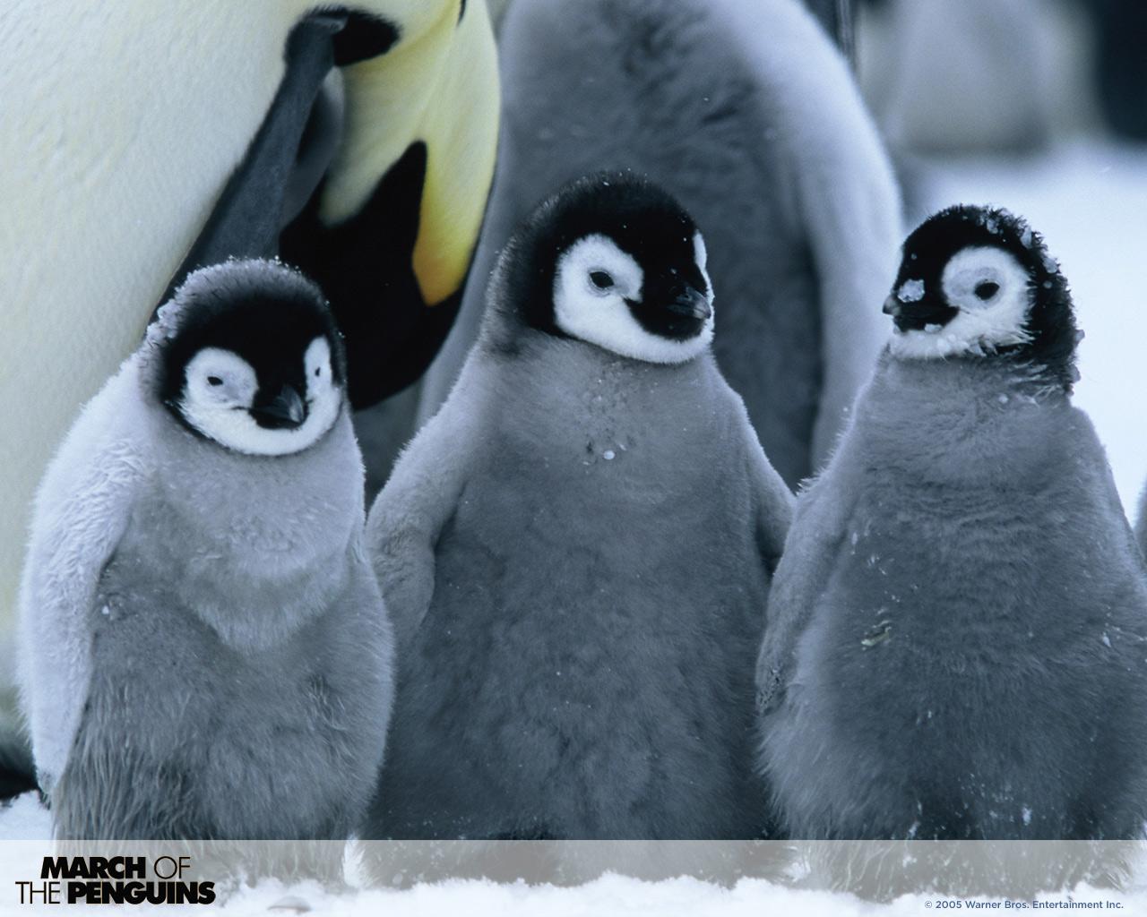 Watch Movie Penguins of Madagascar Full Movie