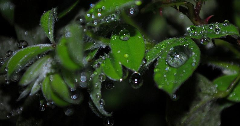 Odore di pioggia profumo d 39 autunno - Odore di fogna in bagno quando piove ...