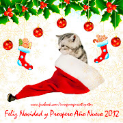 FELIZ DIA DE LA MADRE 2012 - IMAGENES PARA  te amo mam imagenes para facebook