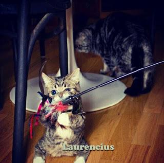 Kucing-Kurcaci-Lil-Bub_7