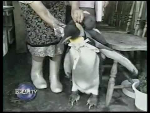 Penguin in the City [VIDEO]