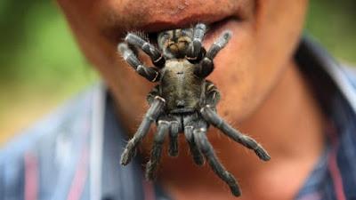 tarantula goreng