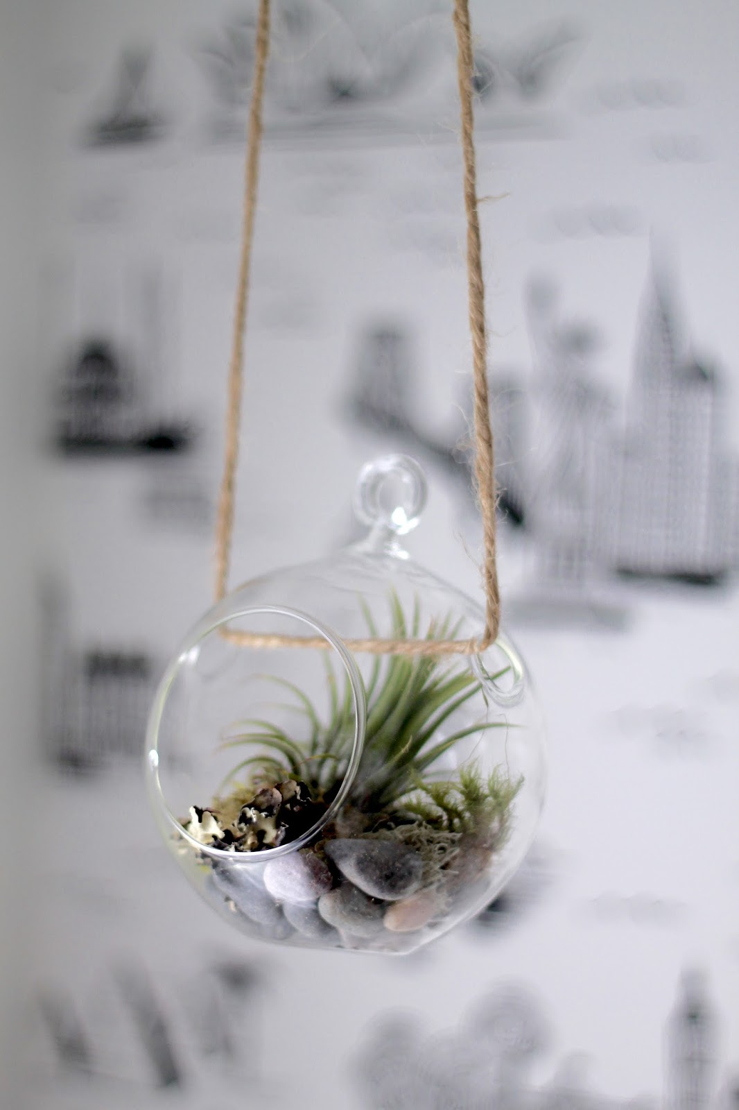 hanging, terrarium, air, plant, diy