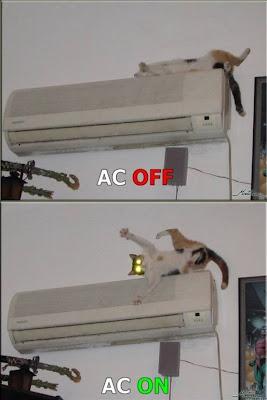 AC Cat
