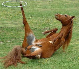 Gambar Lucu Kuda pict