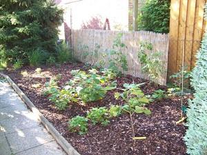 Hacer una Huerta en el Jardín