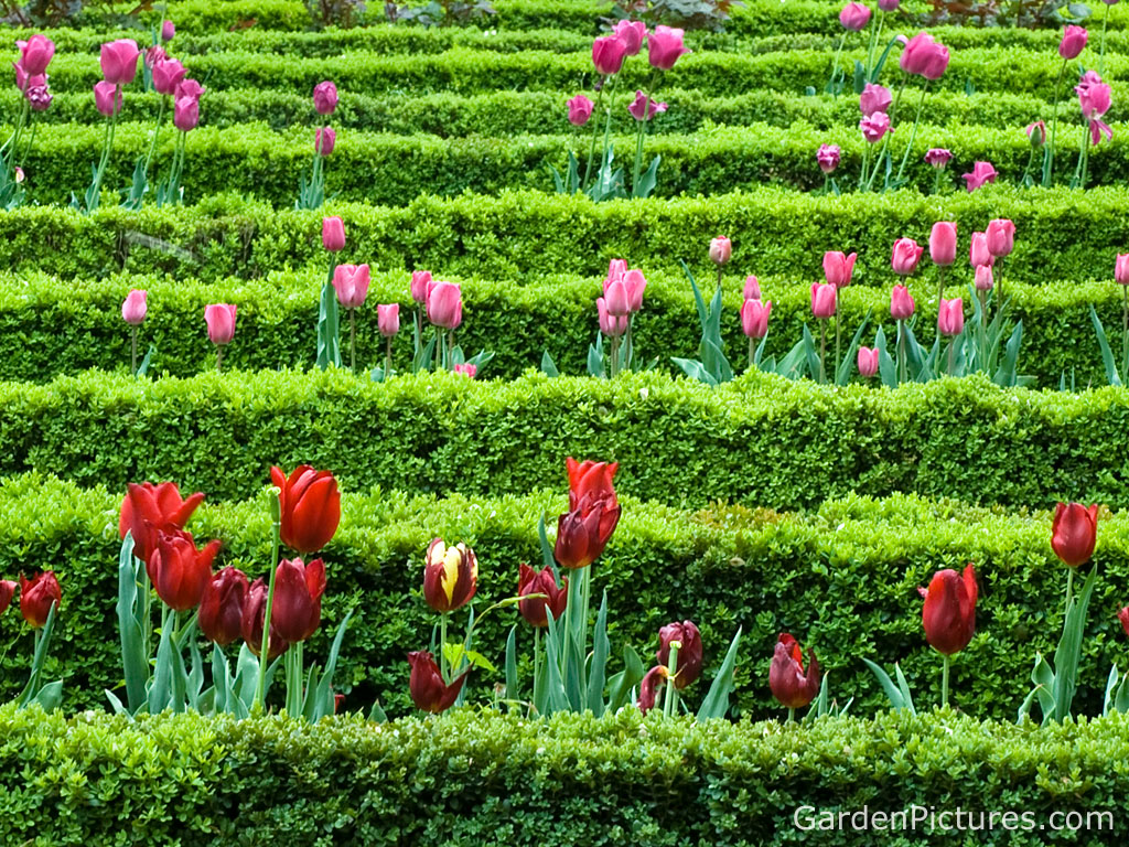 High quality images spring flower garden
