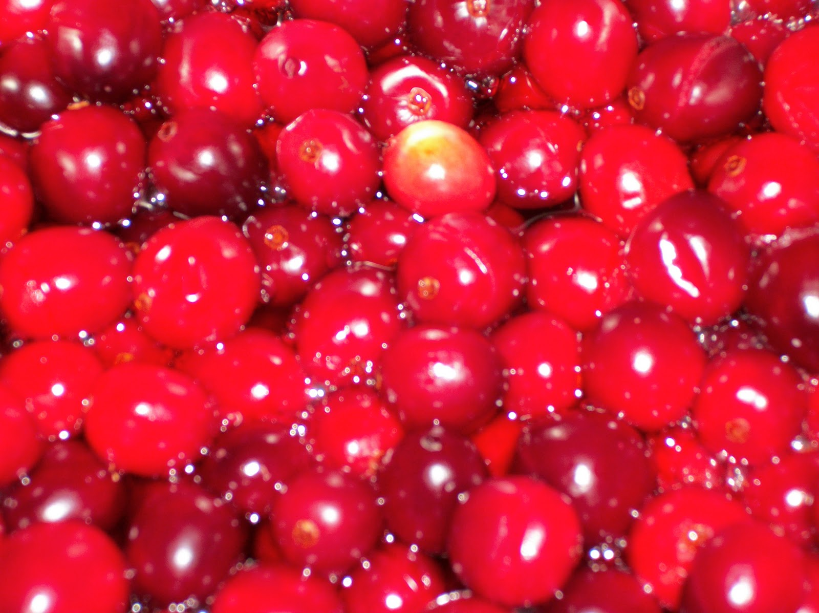 Heart, Hands, Home: Homemade Jellied Cranberry Sauce