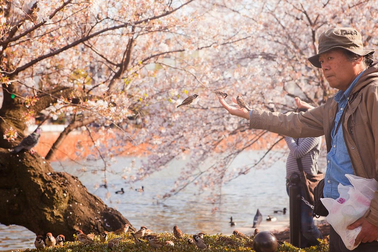 Pájaros en el parque Ueno