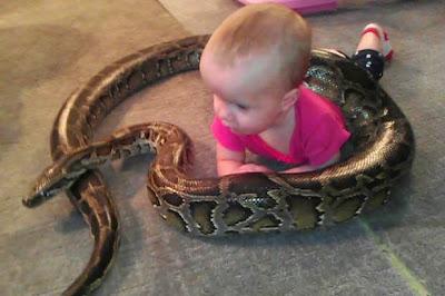 Πατέρας αφήνει το μωρό του να παίζει με θανατηφόρο πύθωνα