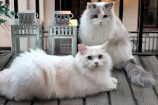 Följ med på Ett kattliv!