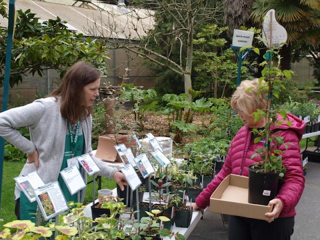 FlorAbundance Puget Sound plant sale