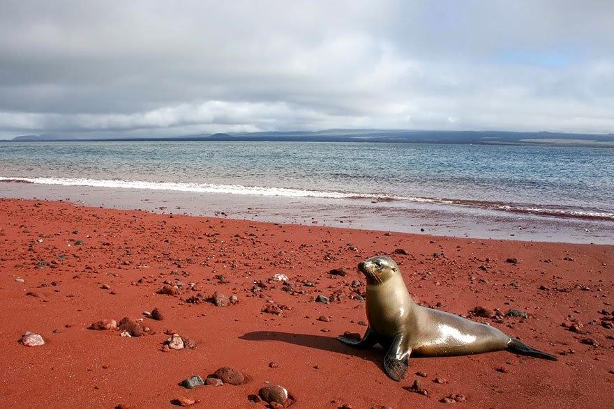 Playa roja (Islas Galápagos)