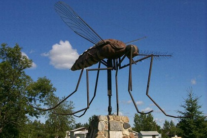 World's biggest Mosquito