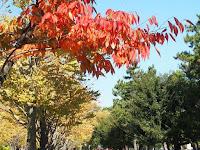 紅葉、もっとも美しい季節・・・。