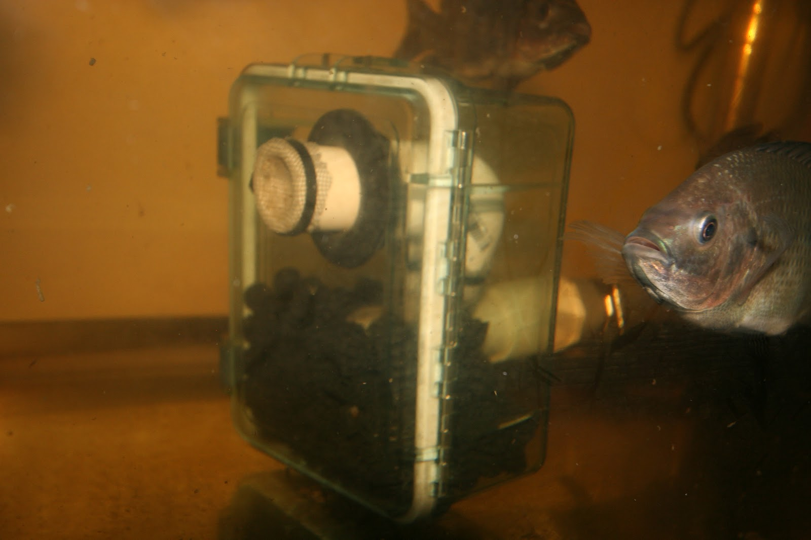 Aquaponic Moving Bed Filter, nitrogen cycle enricher