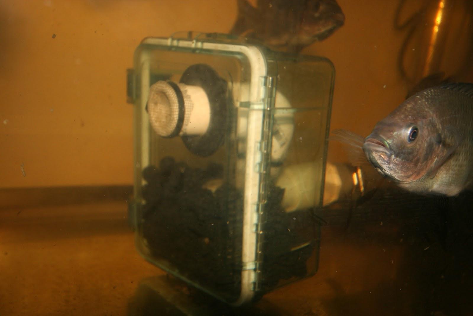 Aquaponic Moving Bed Filter, nitrogen cycle enricher