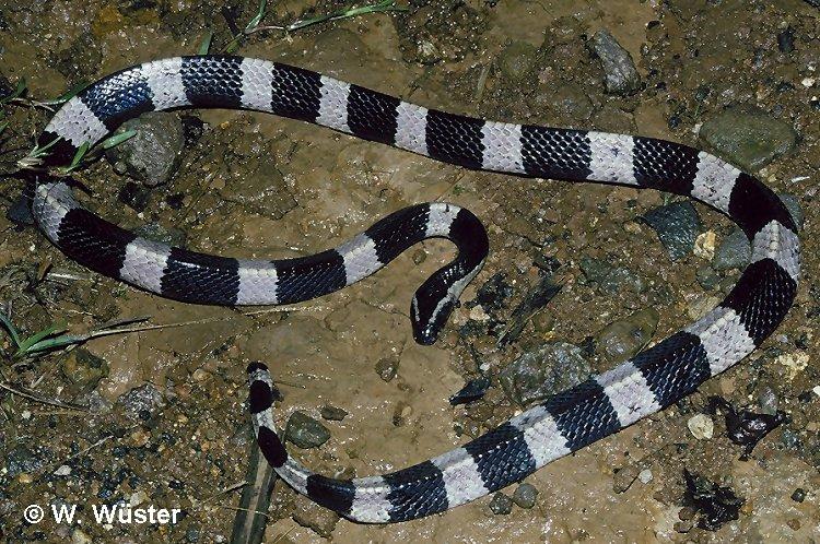 foto foto ular