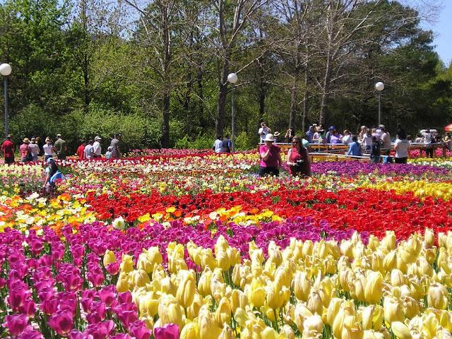 Cho thuê xe ở tại Lâm Đồng-Vườn hoa Đà Lạt