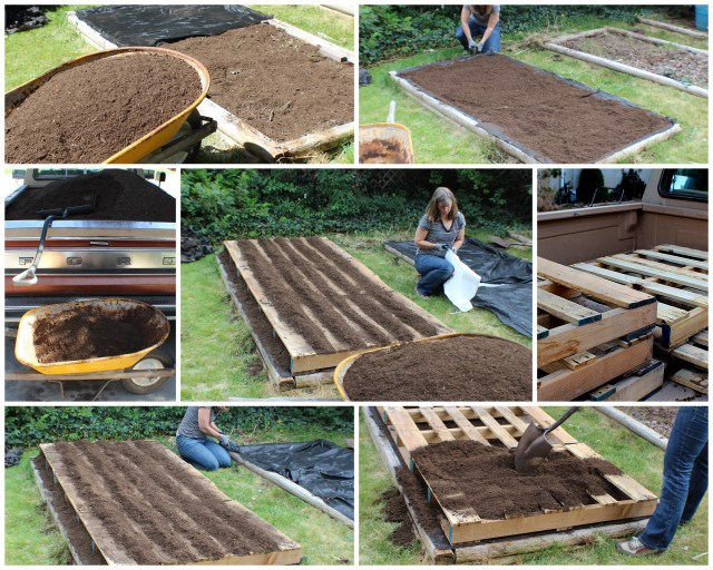 Suburban gardening pallets fruit trees sprouting for Pallet veggie garden