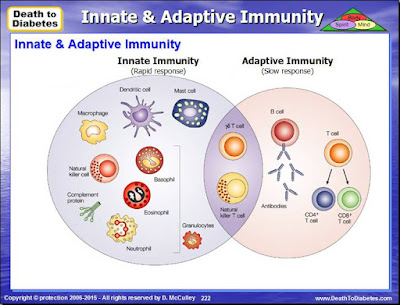 Immunity: Innate & Adaptive